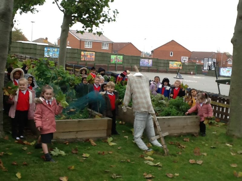 Investigating the Vegetable patch