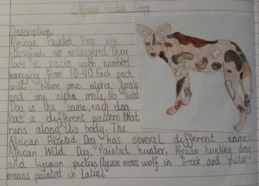 Painted dog fact file